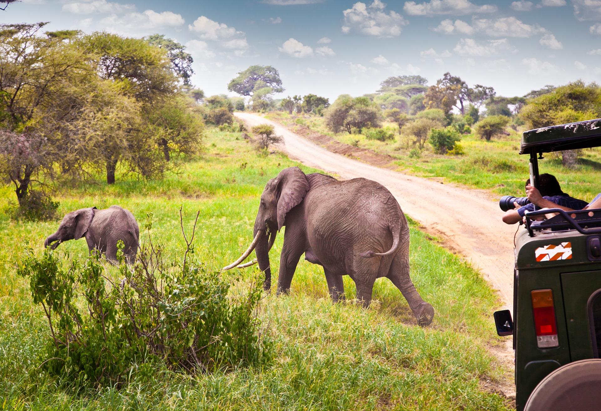 8 of the best safari destinations in africa