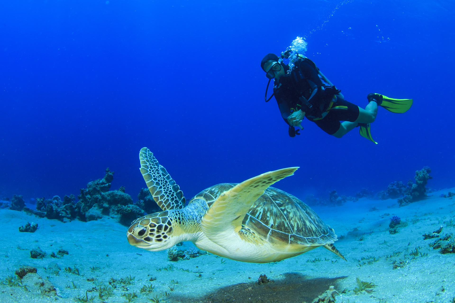 Top 10 dive sites in Asia