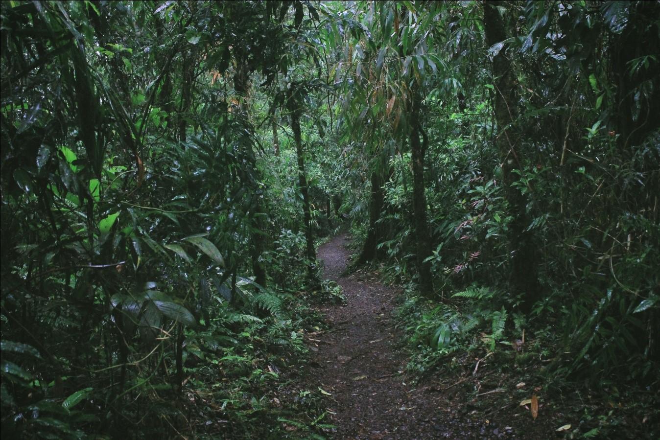 Rainforest adventures in Costa Rica