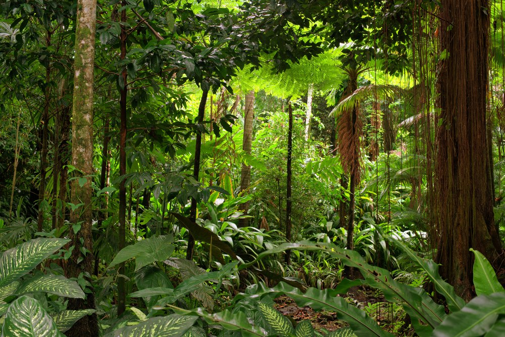 top tips for a rainforest tour