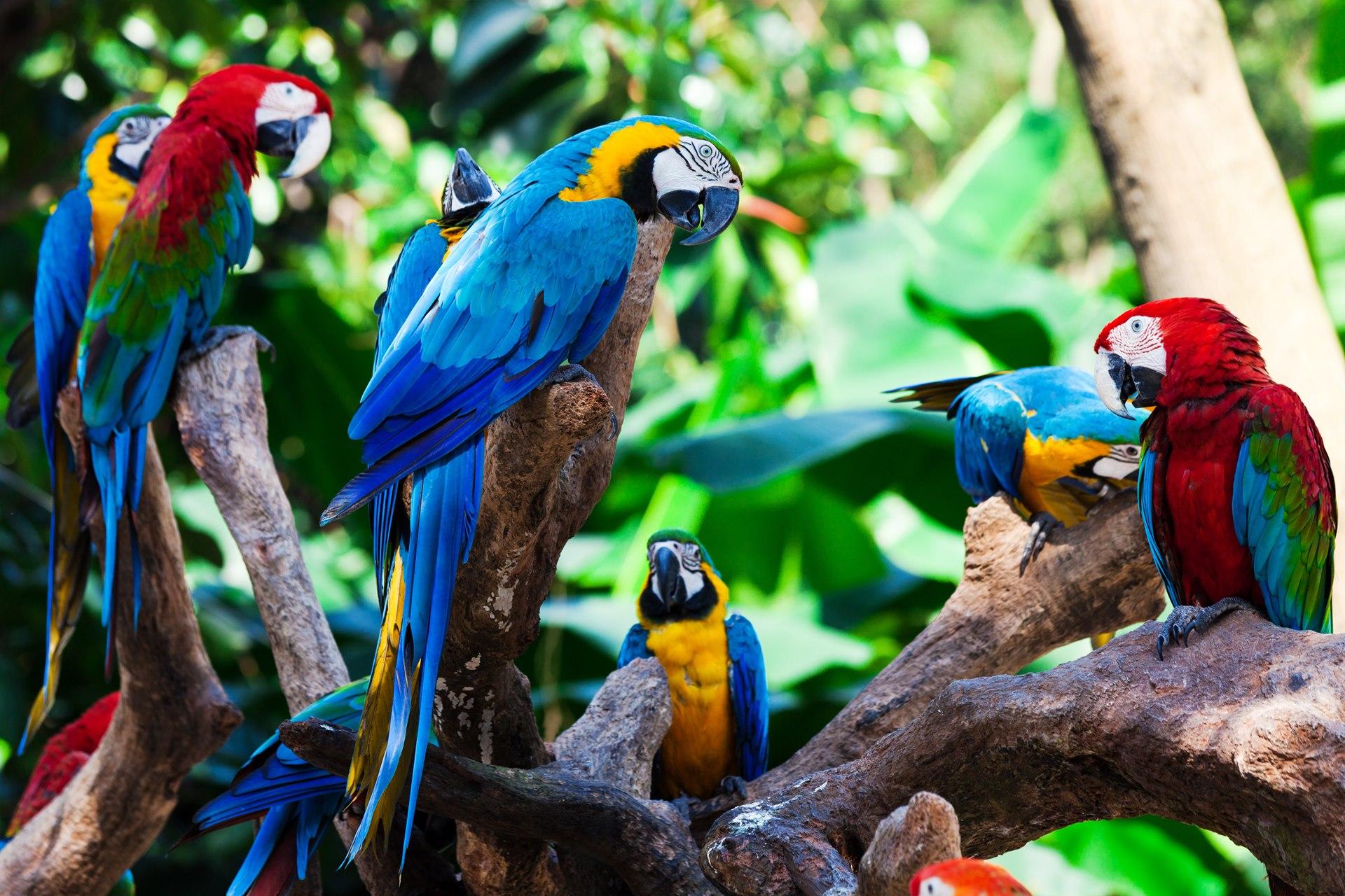 Best rainforest destinations