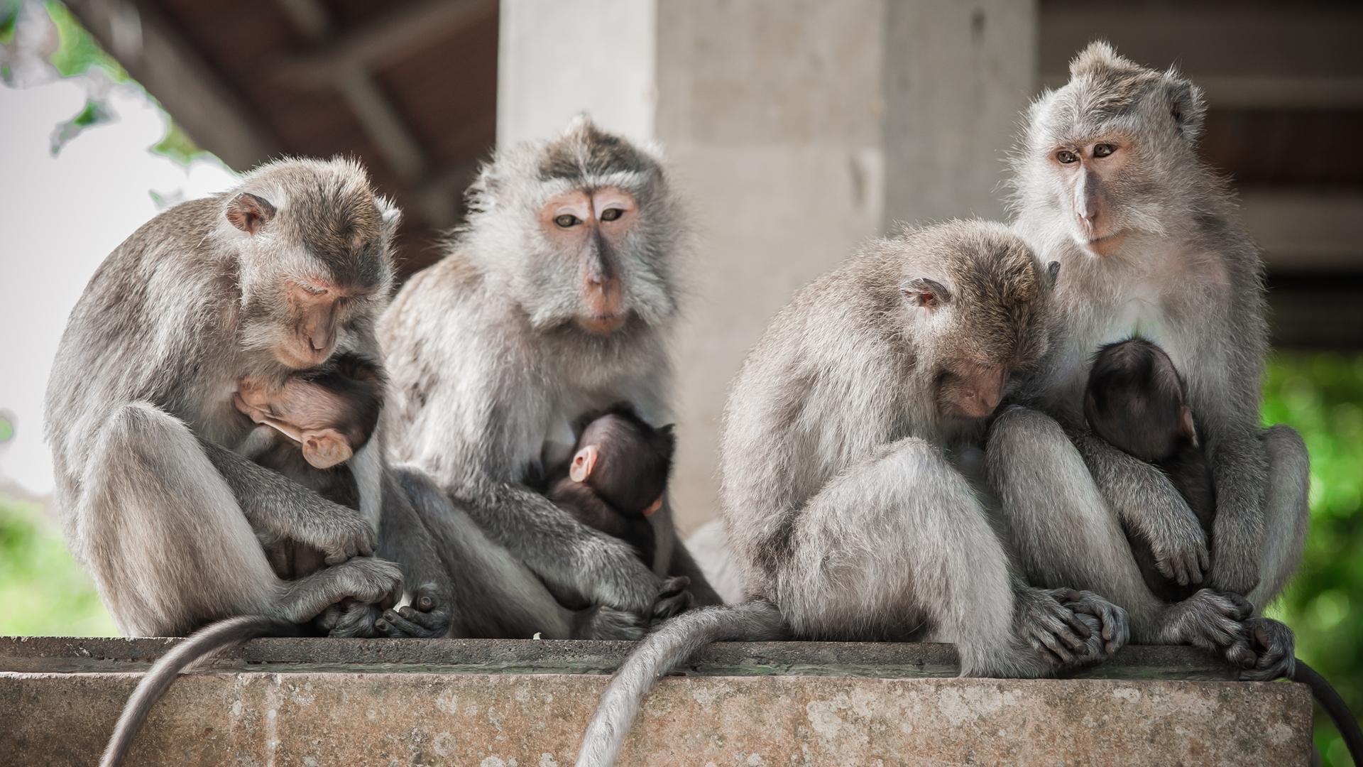 Secret Monkey Forest in Ubud, Bali