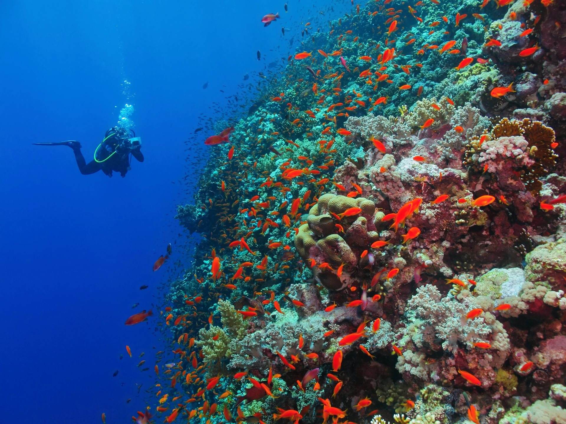 Zanzibar Diving and Snorkelling in the Indian Ocean