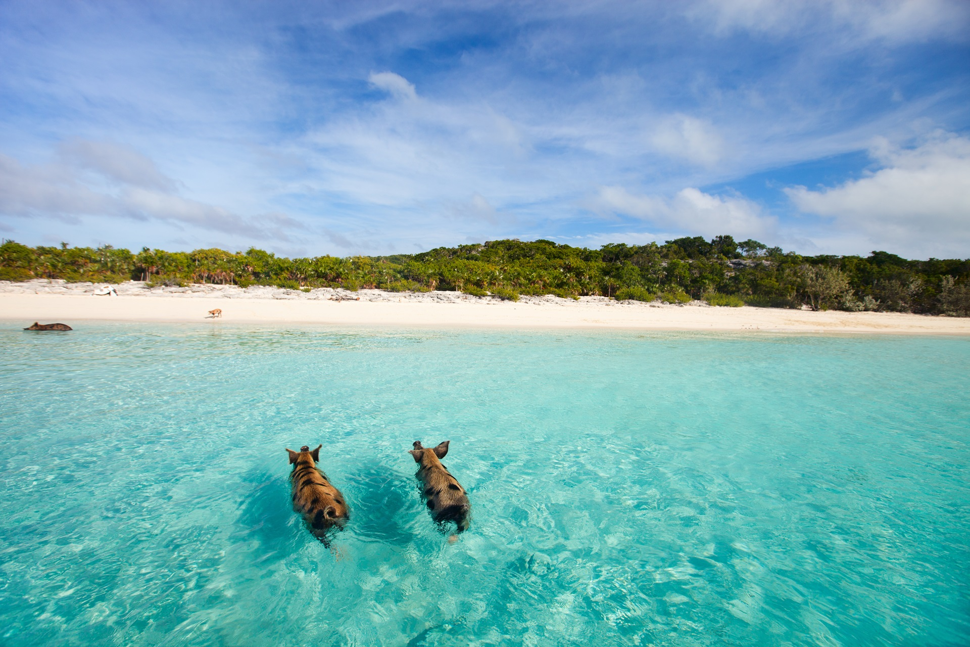 Top Experiances In Bahamas