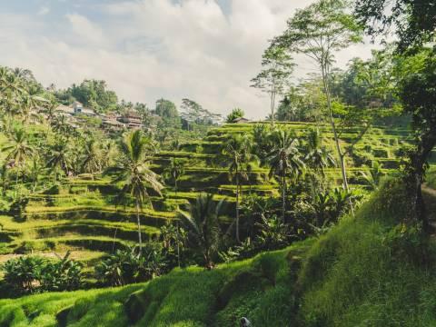 Landscape of Ubud